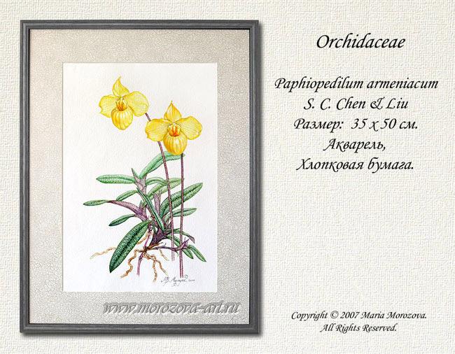 Акварельные рисунки Ваших орхидей на заказ по фотографии или с натуры