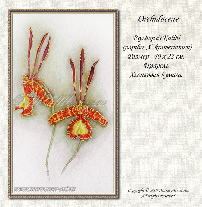 Акварельный рисунок орхидеи Psychopsis Kalihi, на заказ по фотографии или с натуры.