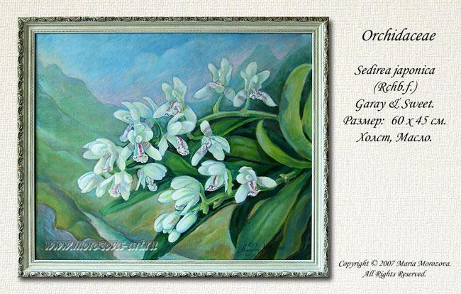 Живописное полотно орхидея Sedirea japonica, живописные изображения орхидей на заказ.